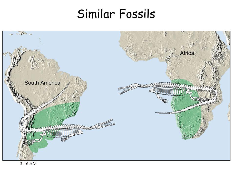 3:48 AM Similar Fossils