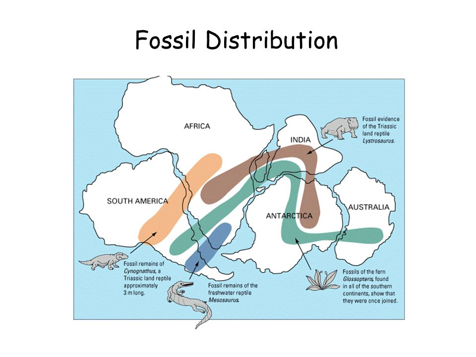 3:48 AM Fossil Distribution
