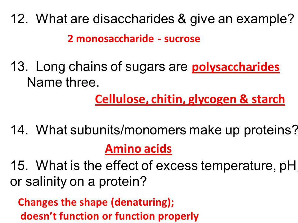 12. What are disaccharides & give an example? 13. Long chains of sugars are. Name three. 14. What subunits/monomers make up proteins? 15. What is the