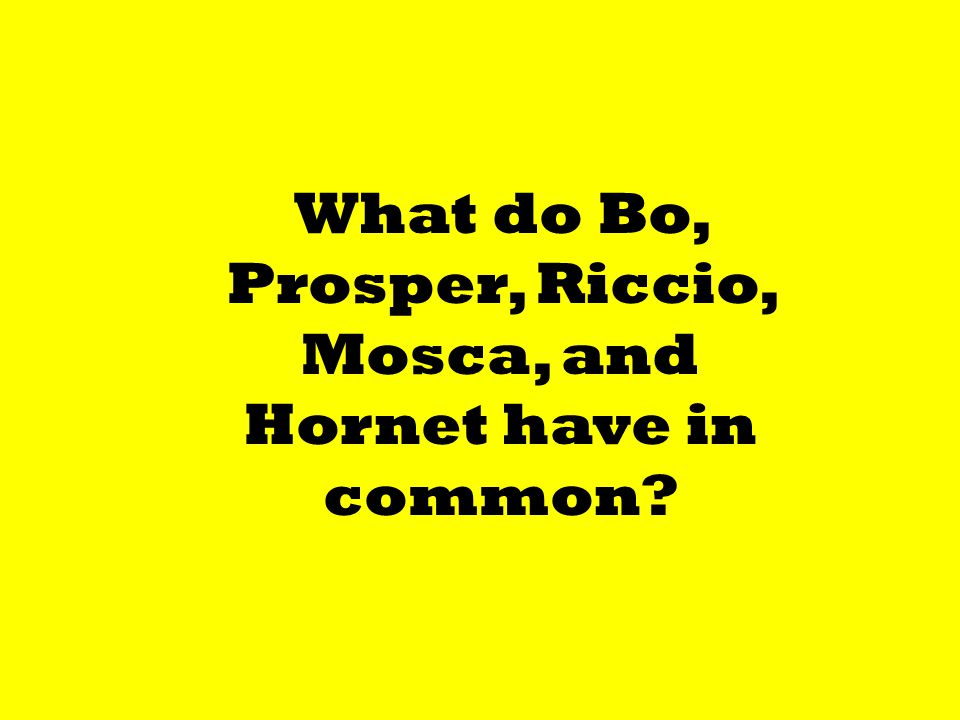 What do Bo, Prosper, Riccio, Mosca, and Hornet have in common?