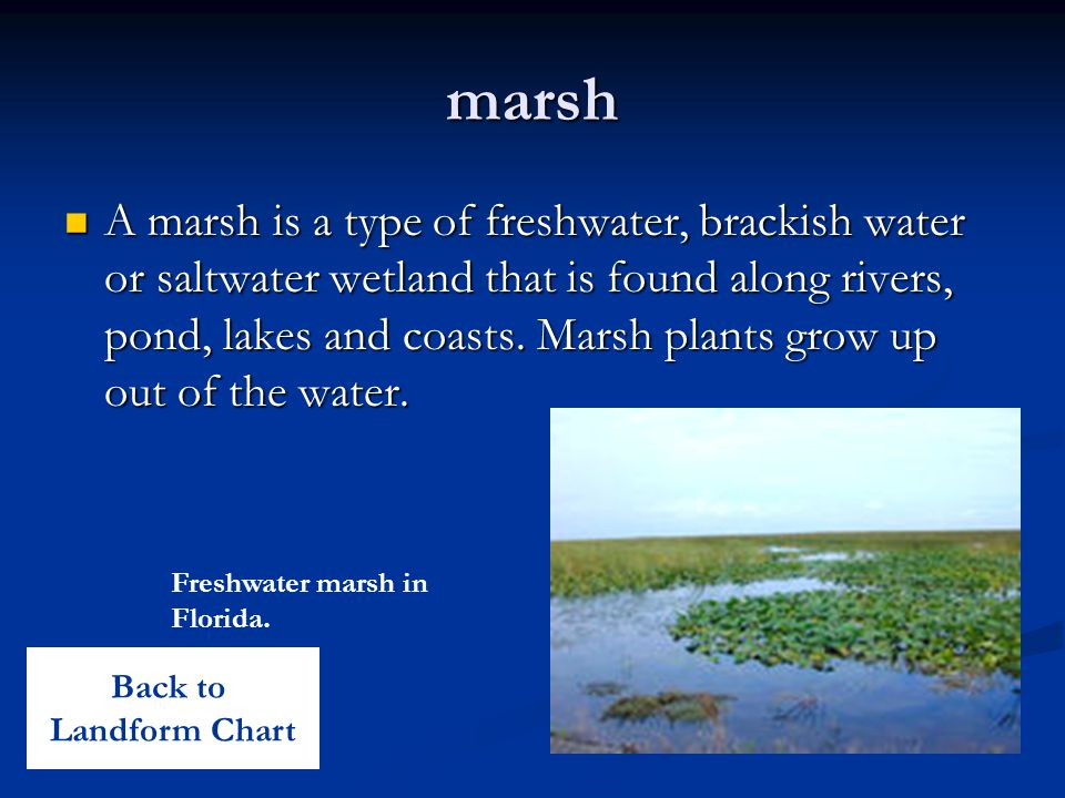 marsh A marsh is a type of freshwater, brackish water or saltwater wetland that is found along rivers, pond, lakes and coasts.