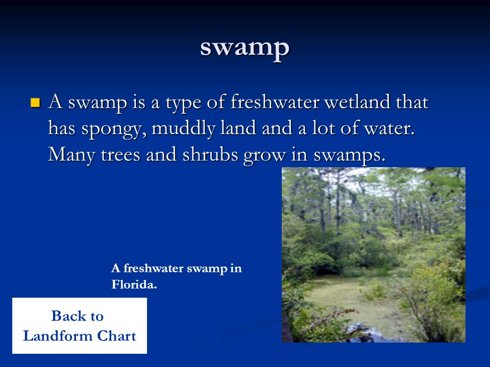 swamp A swamp is a type of freshwater wetland that has spongy, muddly land and a lot of water. Many trees and shrubs grow in swamps. A swamp is a type