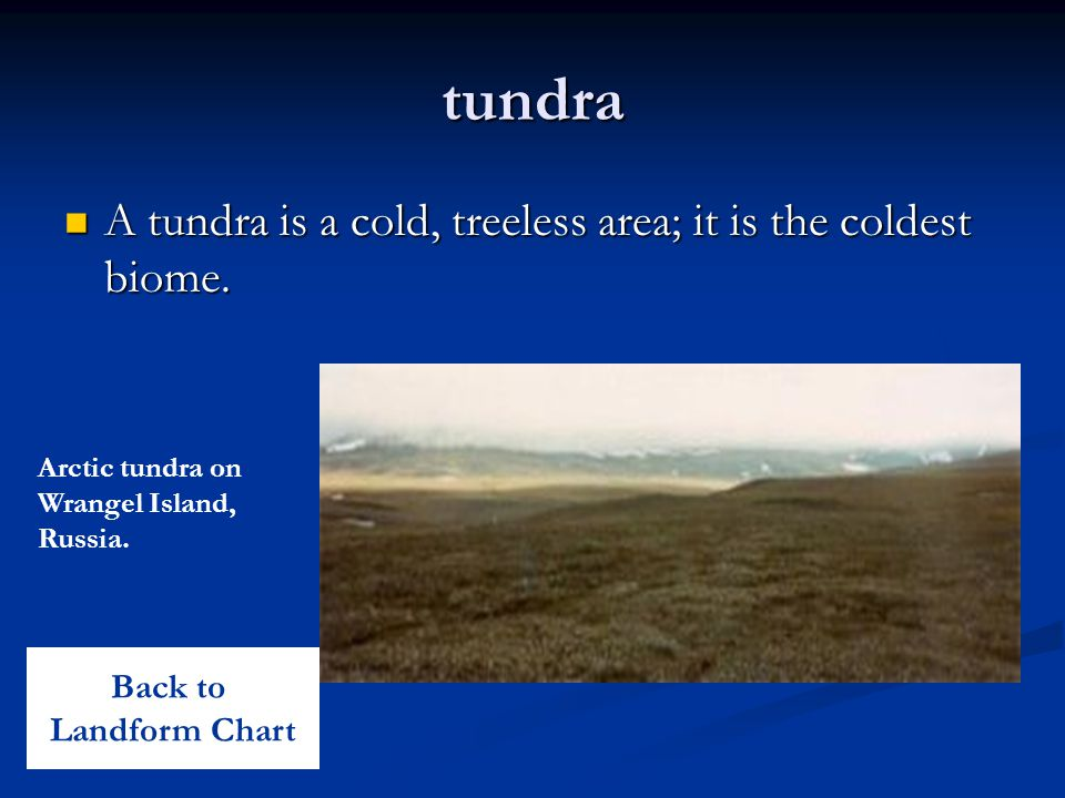 tundra A tundra is a cold, treeless area; it is the coldest biome. A tundra is a cold, treeless area; it is the coldest biome. Arctic tundra on Wrange
