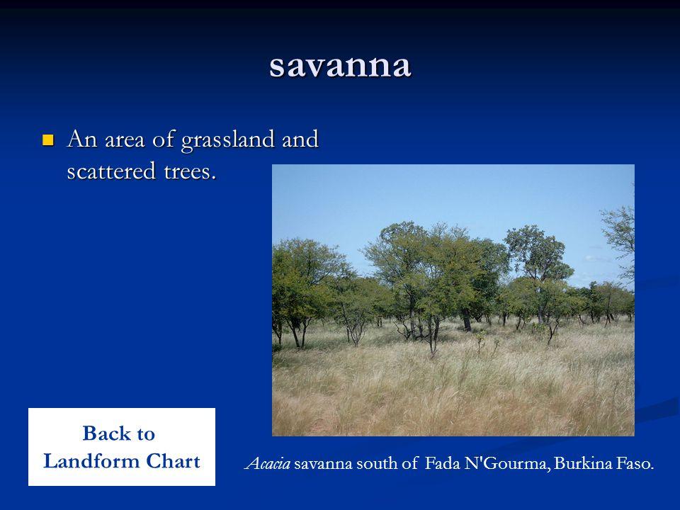 savanna An area of grassland and scattered trees. An area of grassland and scattered trees. Acacia savanna south of Fada N'Gourma, Burkina Faso. Back