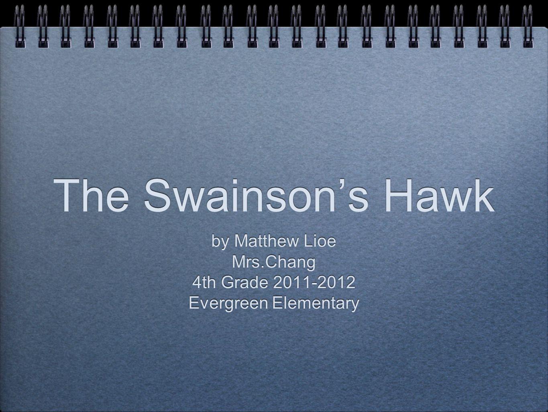 The Swainson's Hawk by Matthew Lioe Mrs.Chang 4th Grade 2011-2012 Evergreen Elementary by Matthew Lioe Mrs.Chang 4th Grade 2011-2012 Evergreen Elementary