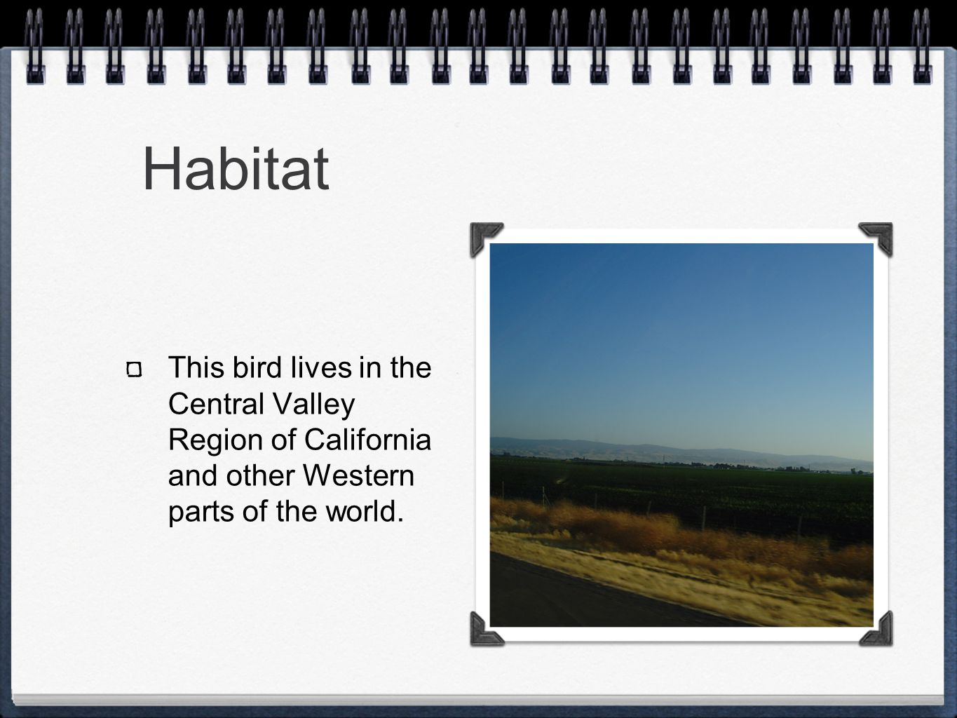Habitat This bird lives in the Central Valley Region of California and other Western parts of the world.
