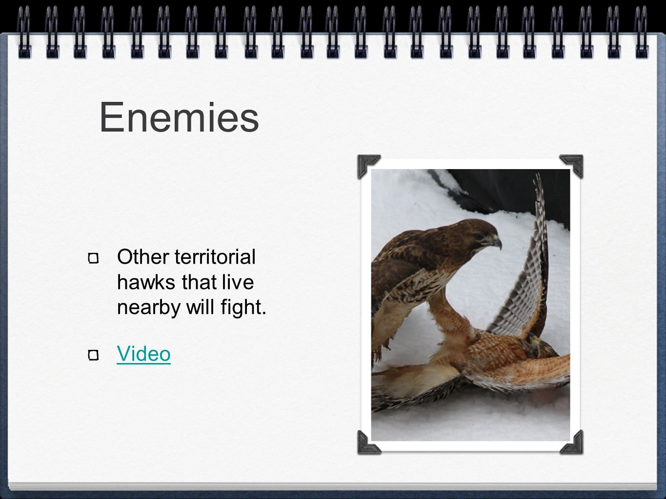 Enemies Other territorial hawks that live nearby will fight. Video