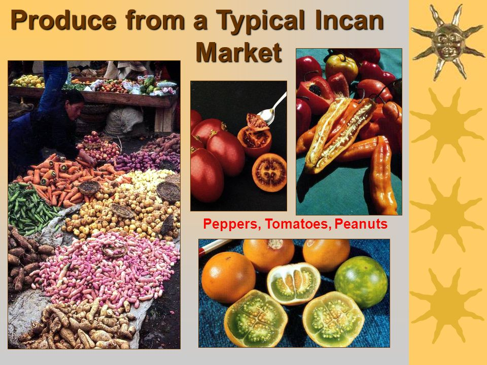 Over 100 Different Types of Potatoes Cultivated by the Incans
