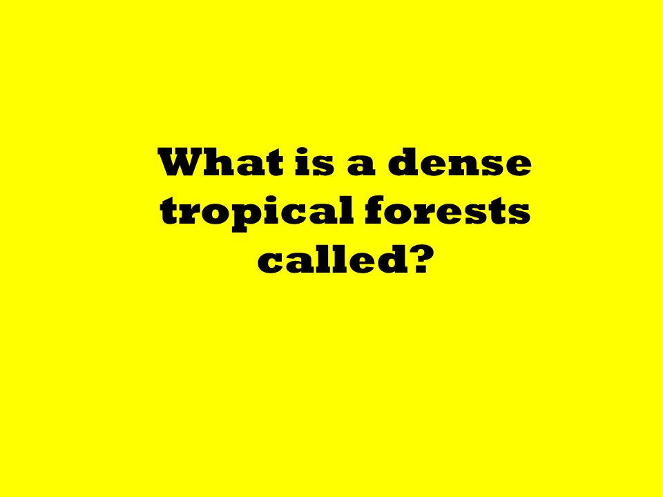 What is a dense tropical forests called?