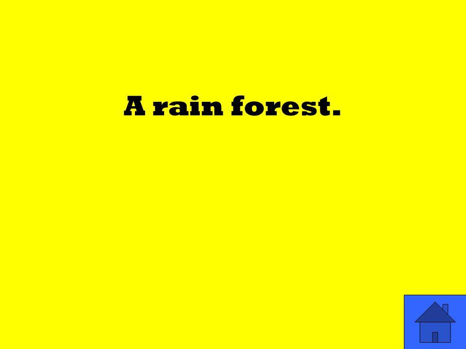 A rain forest.