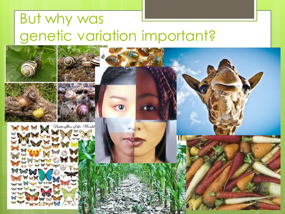 But why was genetic variation important?