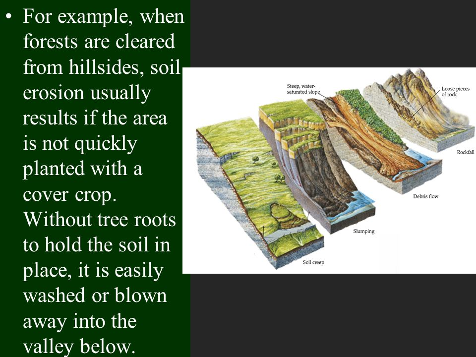 For example, when forests are cleared from hillsides, soil erosion usually results if the area is not quickly planted with a cover crop. Without tree