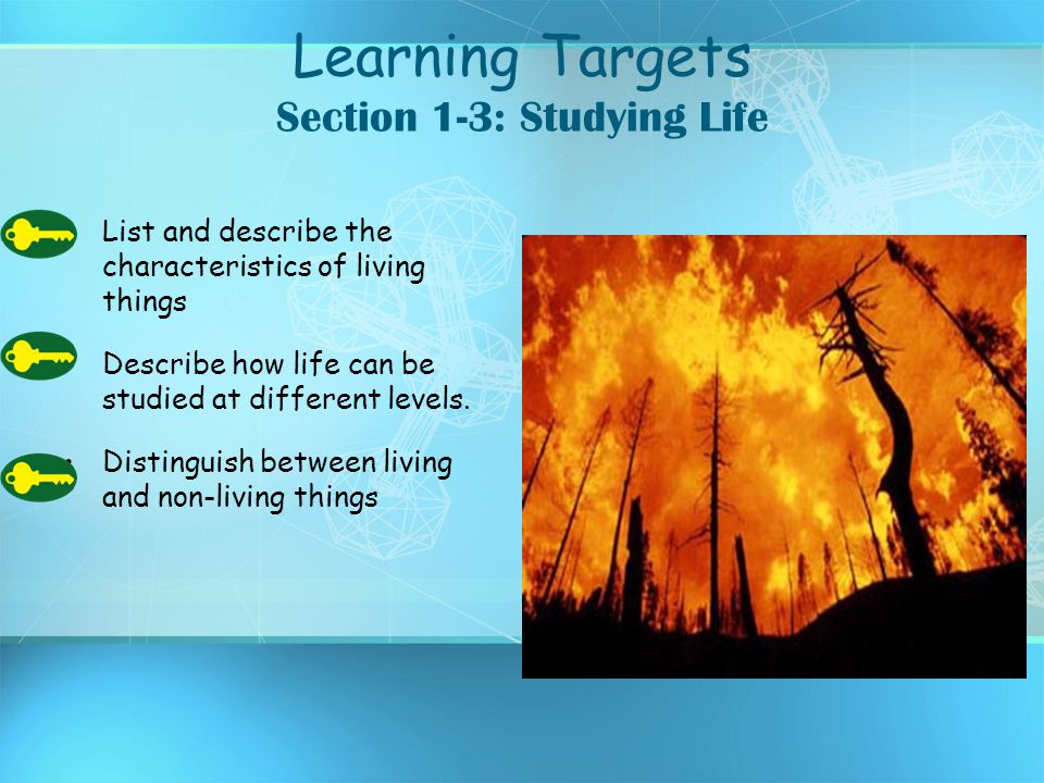 Learning Targets Section 1-3: Studying Life List and describe the characteristics of living things Describe how life can be studied at different level