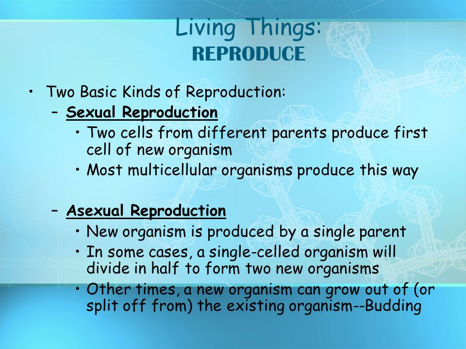 Living Things: REPRODUCE Two Basic Kinds of Reproduction: –Sexual Reproduction Two cells from different parents produce first cell of new organism Mos