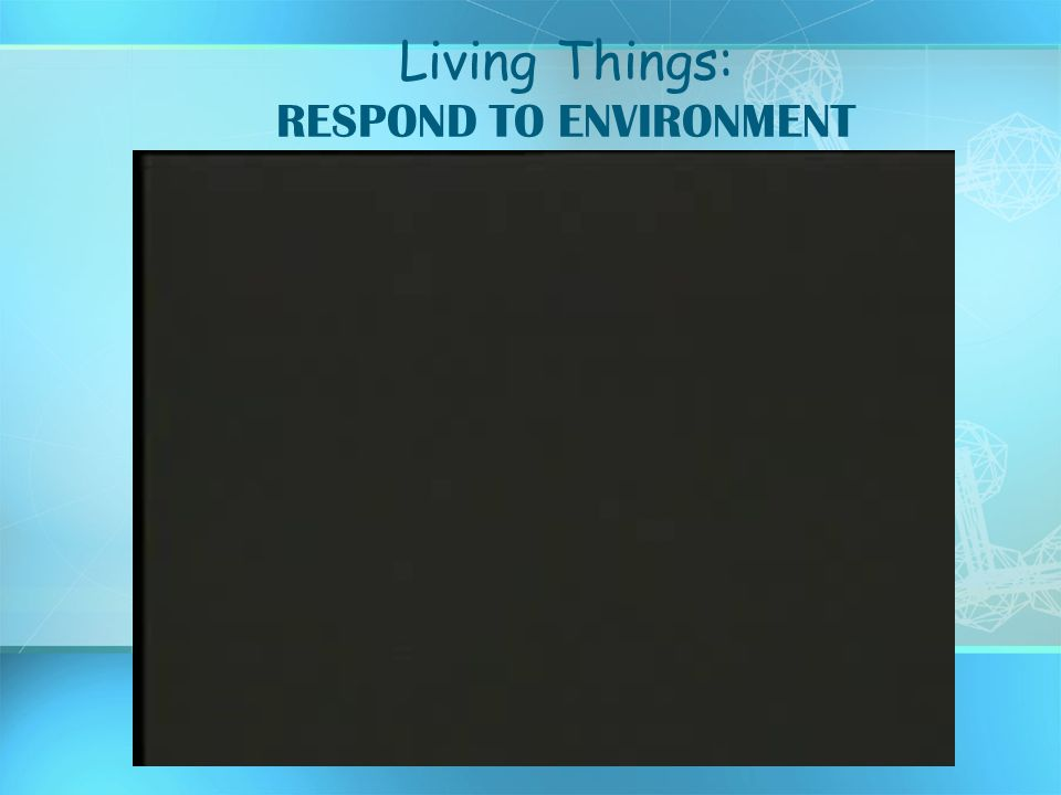 Living Things: RESPOND TO ENVIRONMENT
