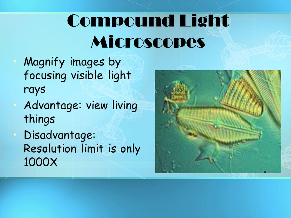 Compound Light Microscopes Magnify images by focusing visible light rays Advantage: view living things Disadvantage: Resolution limit is only 1000X