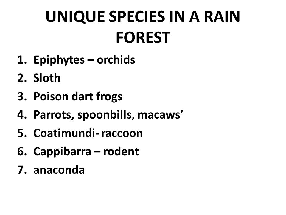 UNIQUE SPECIES IN A RAIN FOREST 1.Epiphytes – orchids 2.Sloth 3.Poison dart frogs 4.Parrots, spoonbills, macaws' 5.Coatimundi- raccoon 6.Cappibarra – rodent 7.anaconda