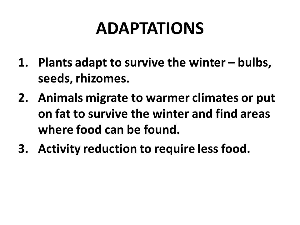 ADAPTATIONS 1.Plants adapt to survive the winter – bulbs, seeds, rhizomes.