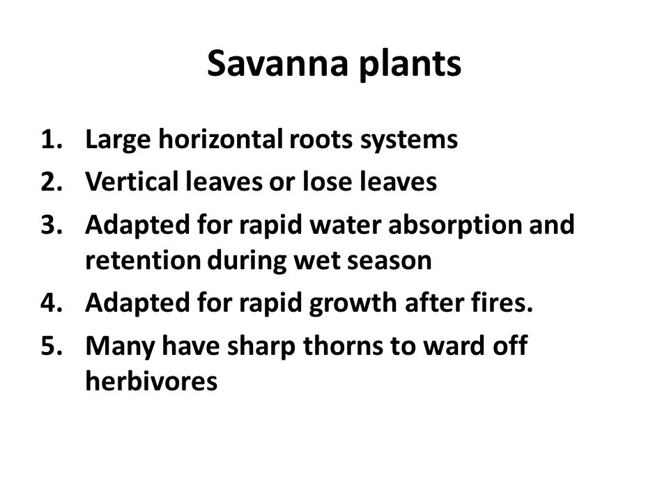 Savanna plants 1.Large horizontal roots systems 2.Vertical leaves or lose leaves 3.Adapted for rapid water absorption and retention during wet season 4.Adapted for rapid growth after fires.