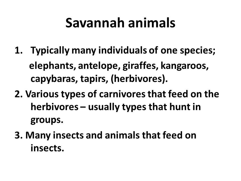 Savannah animals 1.Typically many individuals of one species; elephants, antelope, giraffes, kangaroos, capybaras, tapirs, (herbivores). 2. Various ty