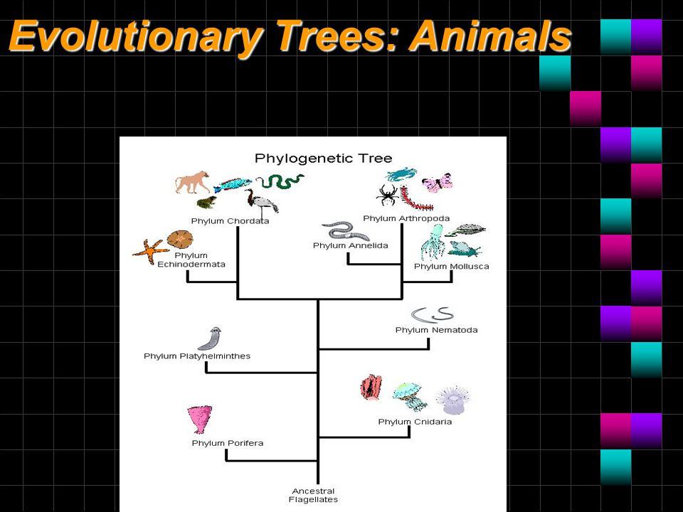 Evolutionary Trees: Animals