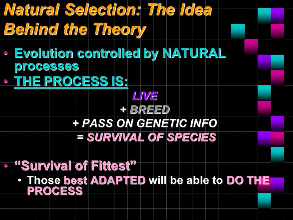 Natural Selection: The Idea Behind the Theory Evolution controlled by NATURAL processesEvolution controlled by NATURAL processes THE PROCESS IS:THE PROCESS IS:LIVE + BREED + PASS ON GENETIC INFO = SURVIVAL OF SPECIES = SURVIVAL OF SPECIES Survival of Fittest Survival of Fittest Those best ADAPTED will be able to DO THE PROCESSThose best ADAPTED will be able to DO THE PROCESS