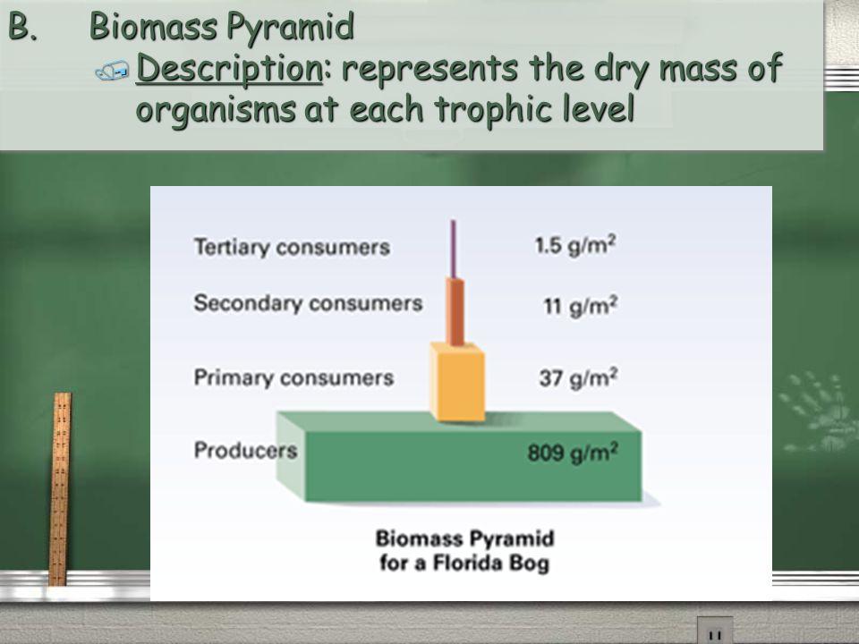 B. Biomass Pyramid / Description: represents the dry mass of organisms at each trophic level B. Biomass Pyramid / Description: represents the dry mass