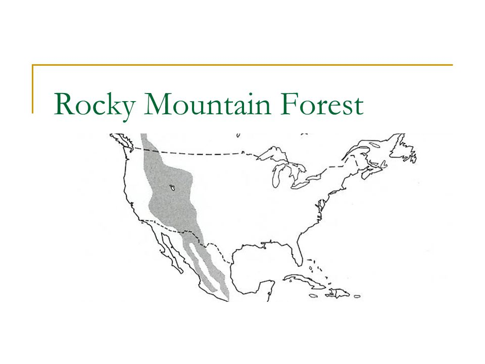 Rocky Mountain Forest