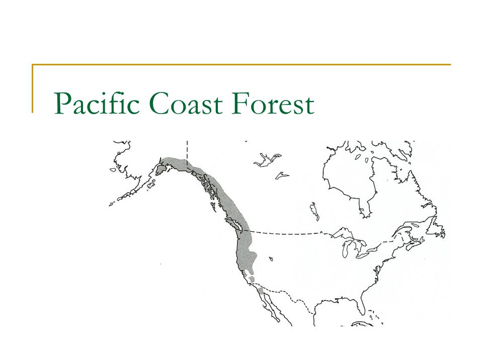 Pacific Coast Forest