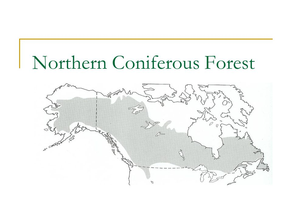 Northern Coniferous Forest