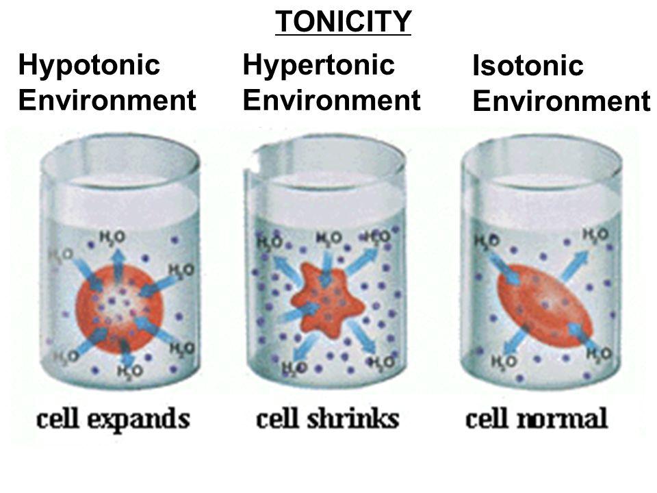 Hypotonic Environment Hypertonic Environment Isotonic Environment TONICITY