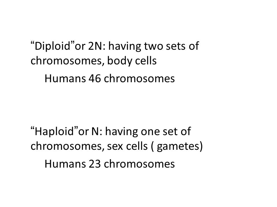 Homologous Chromosomes: matching pair of chromosomes, one inherited from each parent
