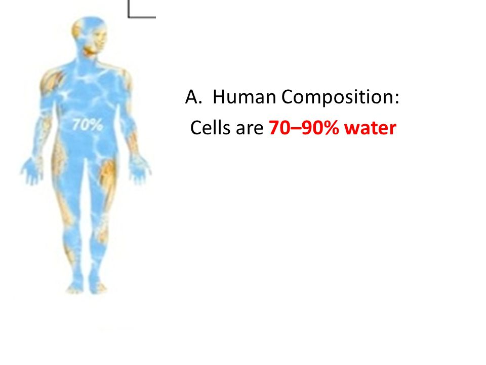 A.Human Composition: Cells are 70–90% water