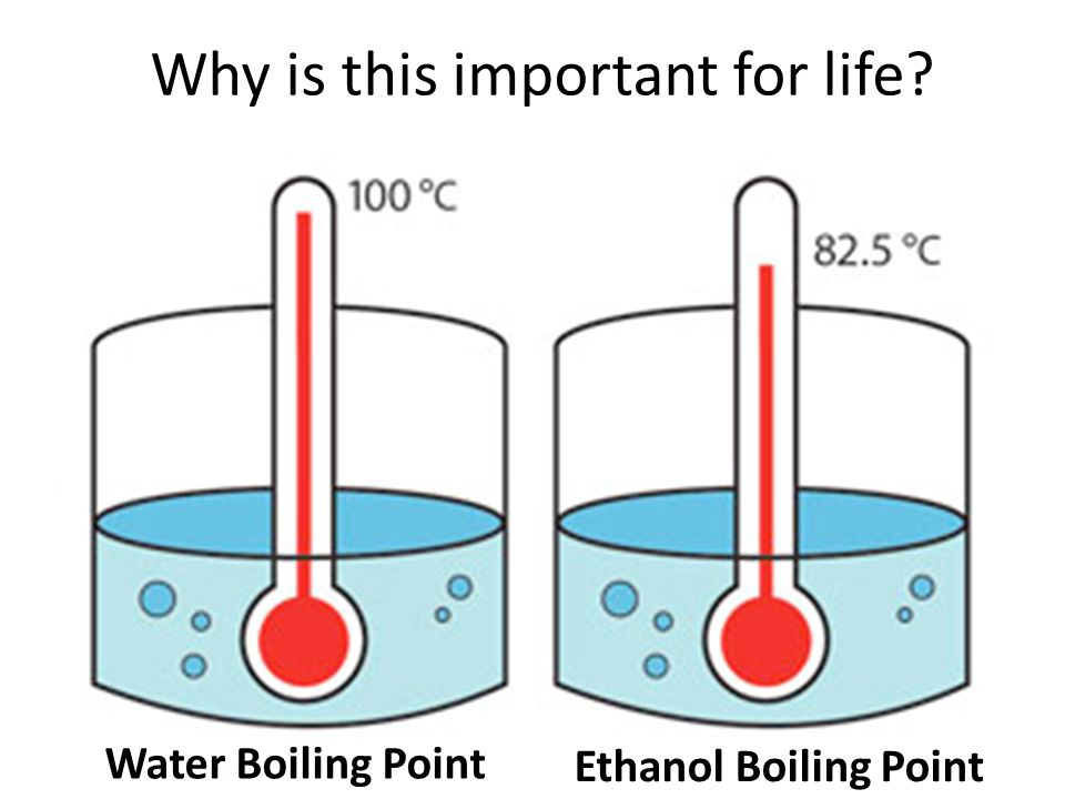 Why is this important for life? Water Boiling Point Ethanol Boiling Point