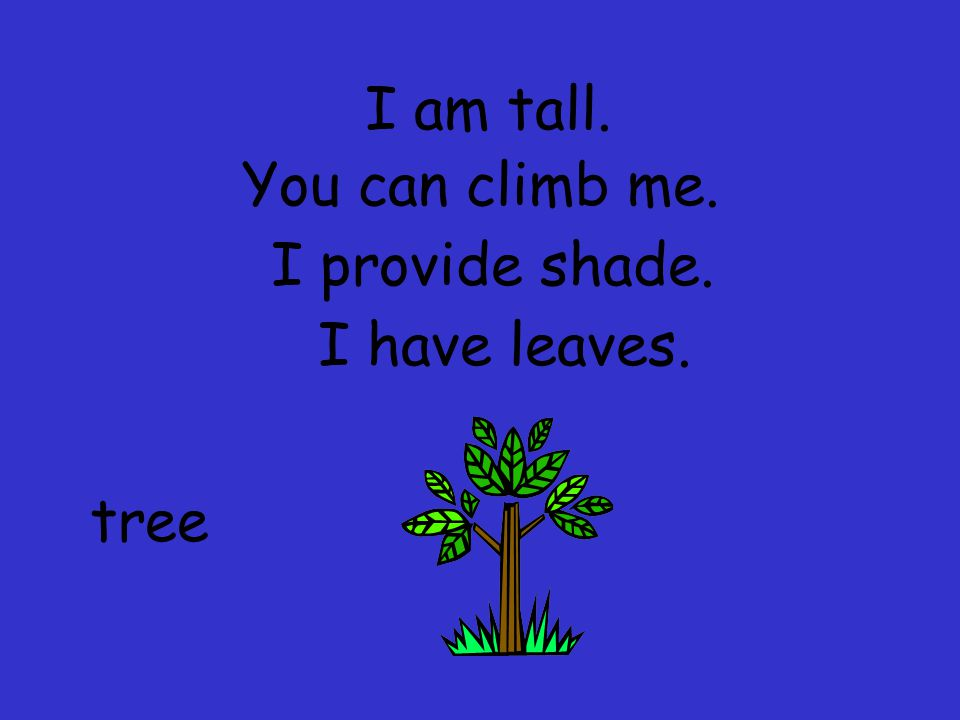 I am tall. You can climb me. I provide shade. I have leaves. tree