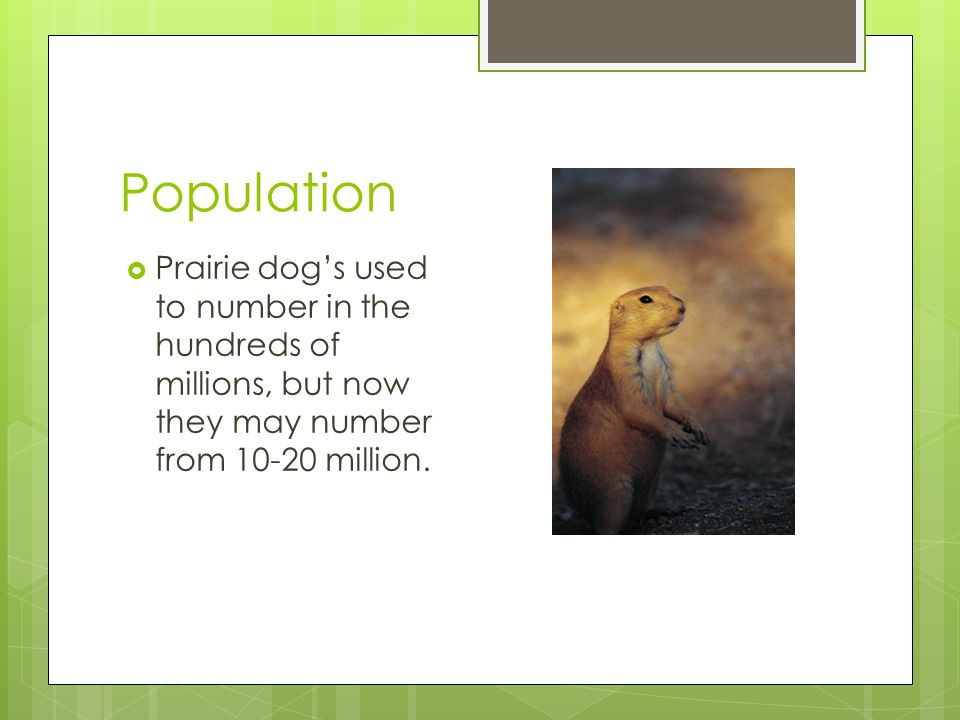 Population  Prairie dog's used to number in the hundreds of millions, but now they may number from 10-20 million.