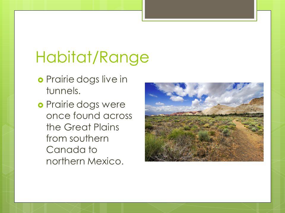 Adaptations  A prairie dog's teeth help the prairie dog chew.