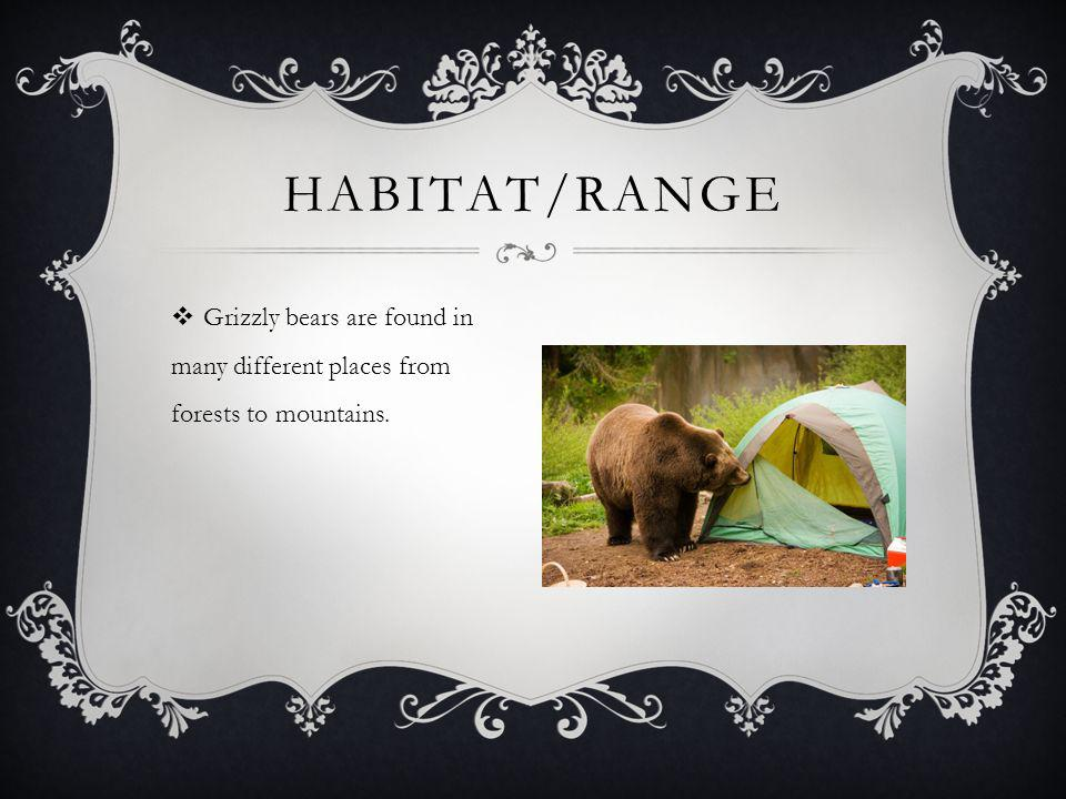  Grizzly bears are found in many different places from forests to mountains. HABITAT/RANGE