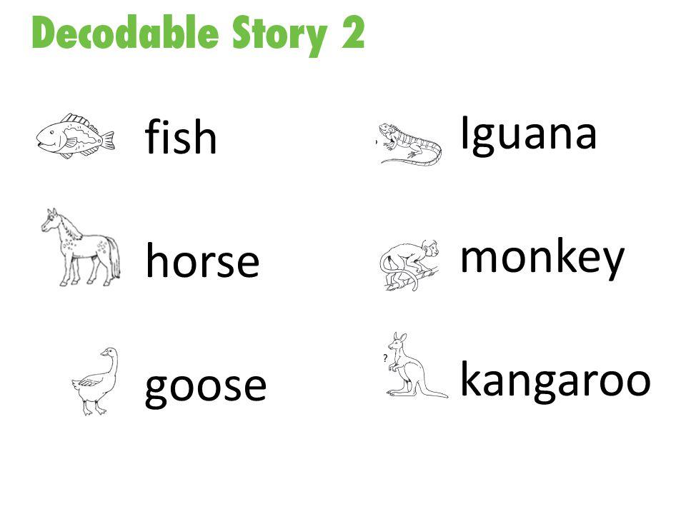 fish horse goose Iguana monkey kangaroo