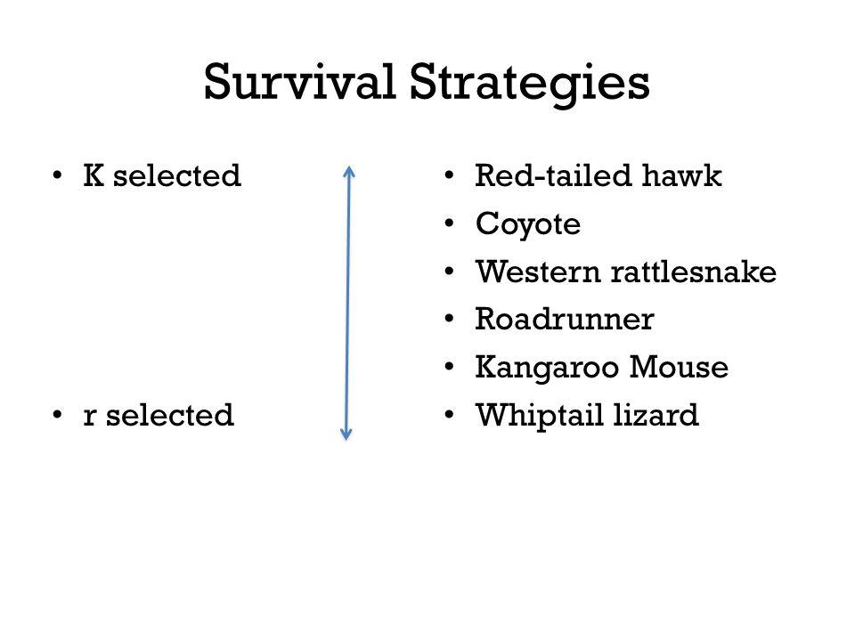 Survival Strategies K selected r selected Red-tailed hawk Coyote Western rattlesnake Roadrunner Kangaroo Mouse Whiptail lizard
