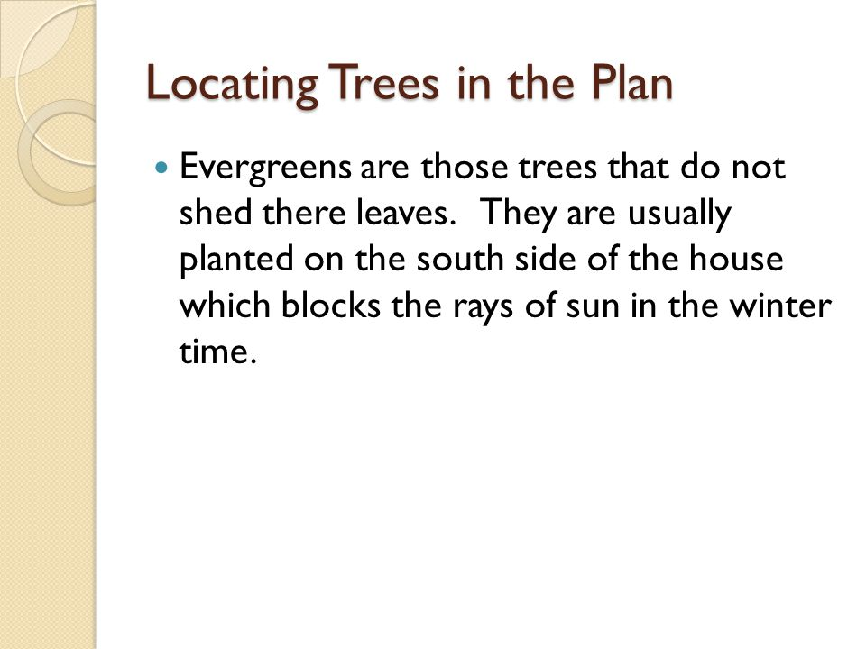 Locating Trees in the Plan Evergreens are those trees that do not shed there leaves.