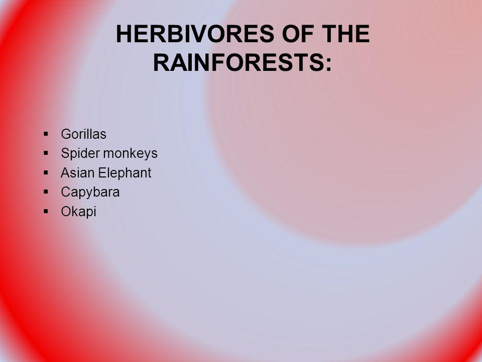 HERBIVORES OF THE RAINFORESTS:  Gorillas  Spider monkeys  Asian Elephant  Capybara  Okapi