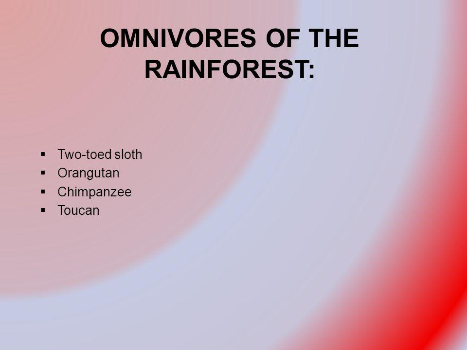 OMNIVORES OF THE RAINFOREST:  Two-toed sloth  Orangutan  Chimpanzee  Toucan