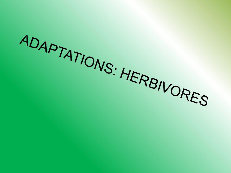 ADAPTATIONS: HERBIVORES