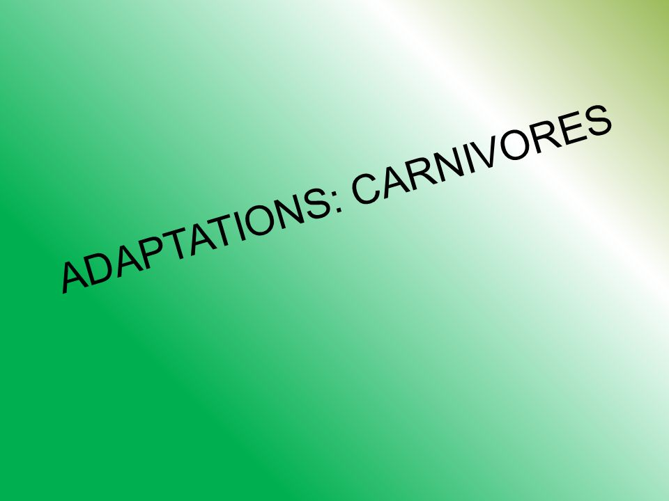 ADAPTATIONS: CARNIVORES