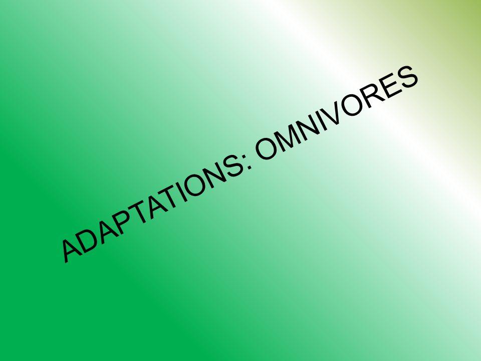 ADAPTATIONS: OMNIVORES