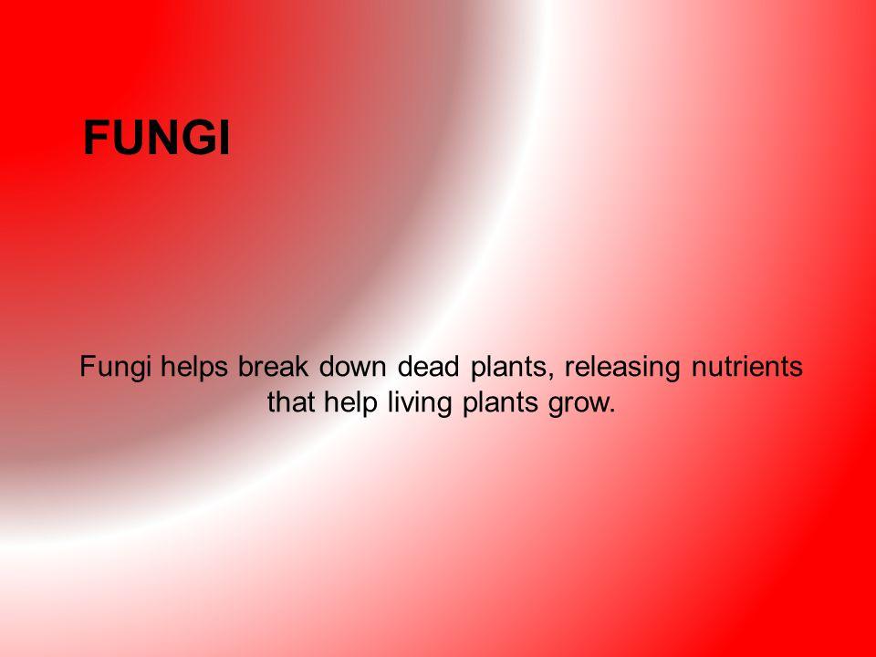 FUNGI Fungi helps break down dead plants, releasing nutrients that help living plants grow.