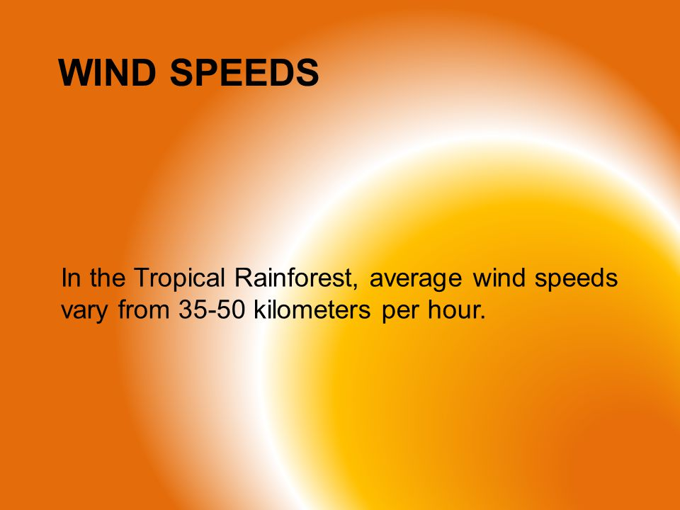 WIND SPEEDS In the Tropical Rainforest, average wind speeds vary from 35-50 kilometers per hour.