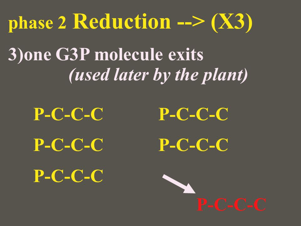 phase 2 Reduction --> (X3) 3)one G3P molecule exits (used later by the plant) P-C-C-C