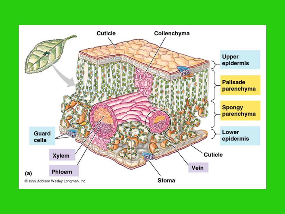 via. ATP synthase